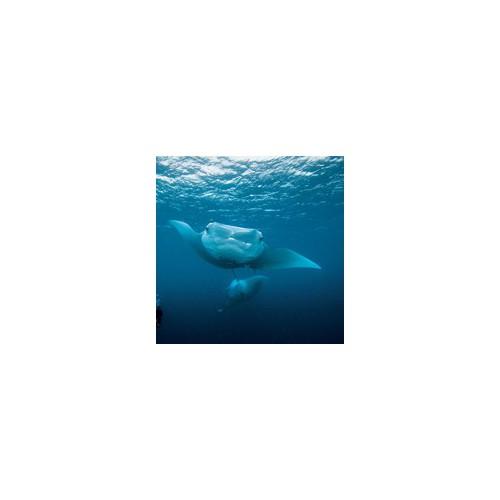 Powtórka z nurkowania (Scuba Review)